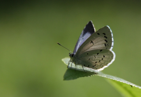 д бабочка3