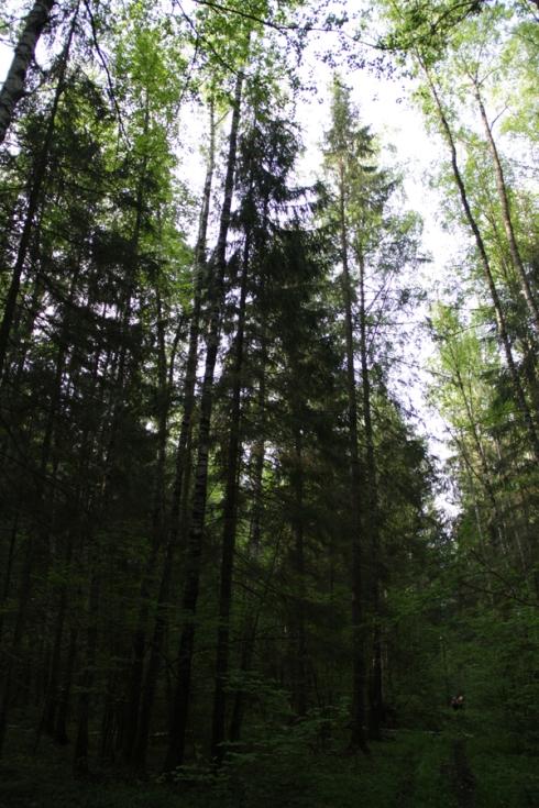 д дорога в лесу