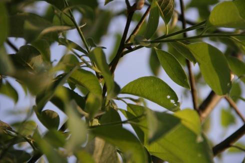 д листва