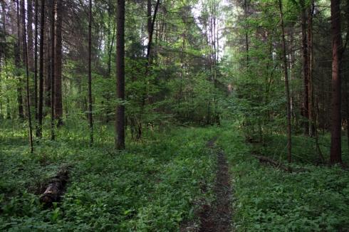 д тропинка в лесу
