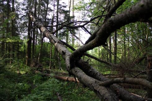 д упавшее дерево