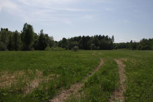 дд дорога в поле