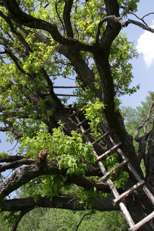 дд лестнца на дерево