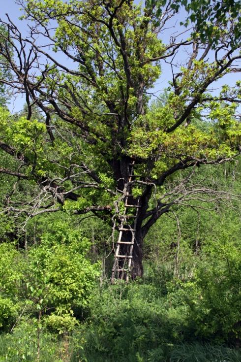 дд лестнца на дерево1
