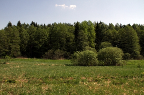 дд опушка леса