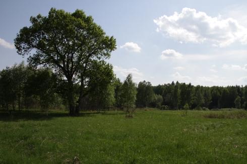 ддд дерево