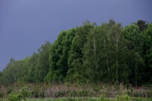 ддд деревья на фоне грозового неба