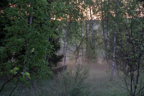 утро деревья и туман