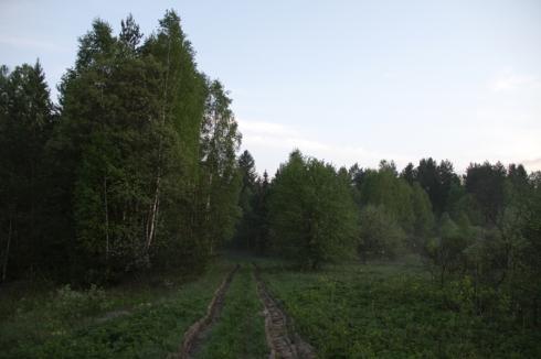 утро дорога в лес 9кп