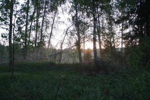 утро лес