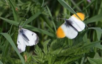Ещё встречаются бабочки