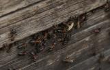 Зато муравьям хорошо