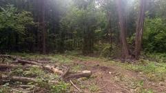Лес и куча веток